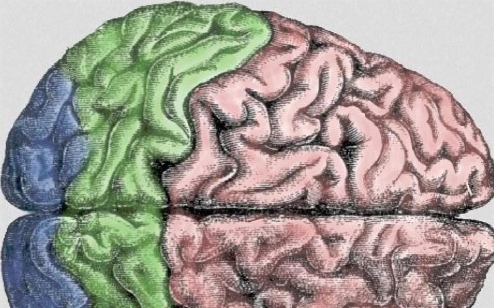 Alteração de um único gene pode rejuvenescer um cérebro adulto
