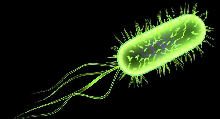 e-coli-streptococci1