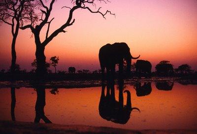 intercambio-africa-sul