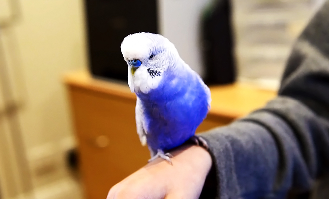 bluey-r2-d2